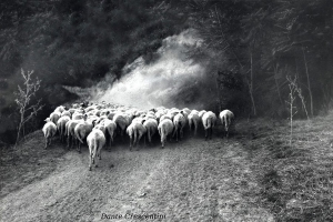 FOTOCLUB PESARO